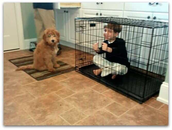 Aidan in cage