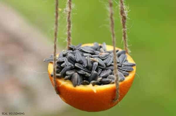 Orange Bird Feeders by Real Housemoms