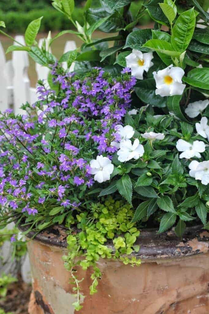 3 Must Have Plants for Summer by Carmen Johnston Gardens