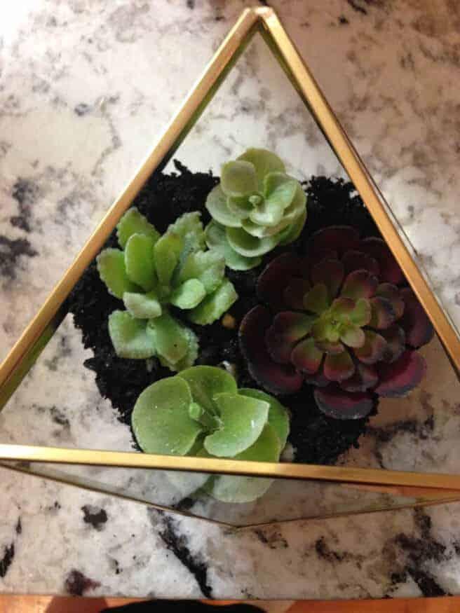 DIY Terrarium by Studio Style Blog