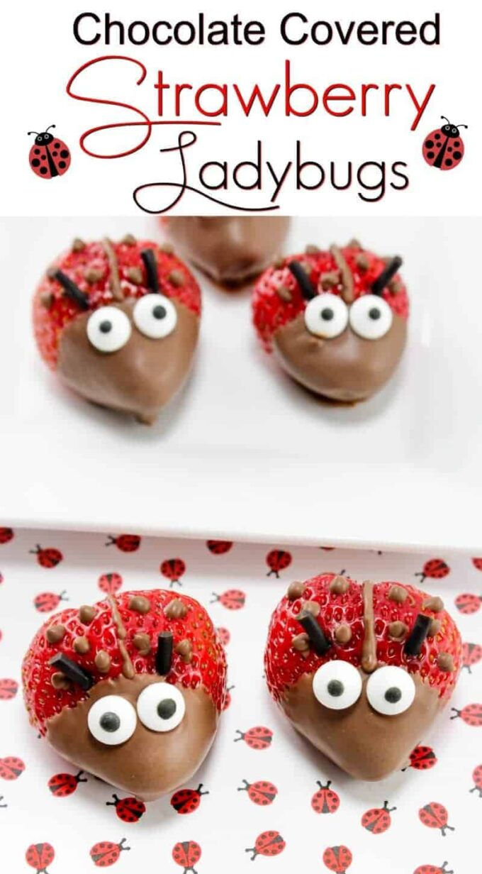 Chocolate Covered Strawberry Ladybugs - the chocolate covered strawberries make the perfect healthy dessert for a summer party or Valentine's Day