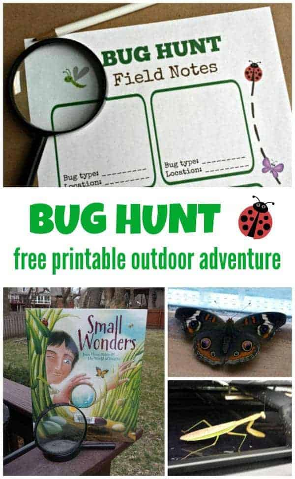 Outdoor Bug Hunt by KC Edventures | Get outdoors with the family and have some fun with these great ideas for outdoor activities for kids!