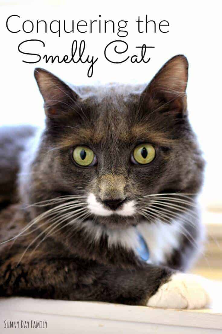 How to Keep a Home Odor Free with Cats by Sunny Day Family | Smell Hacks that will have your home smelling amazing!