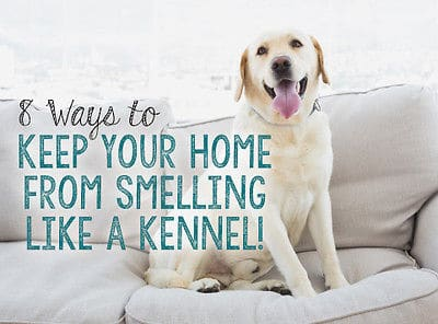8 Ways to Keep Your Home from Smelling Like a Kennel | Dog Hacks that Really Work