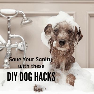 These Dog Hacks are Pure Genius!