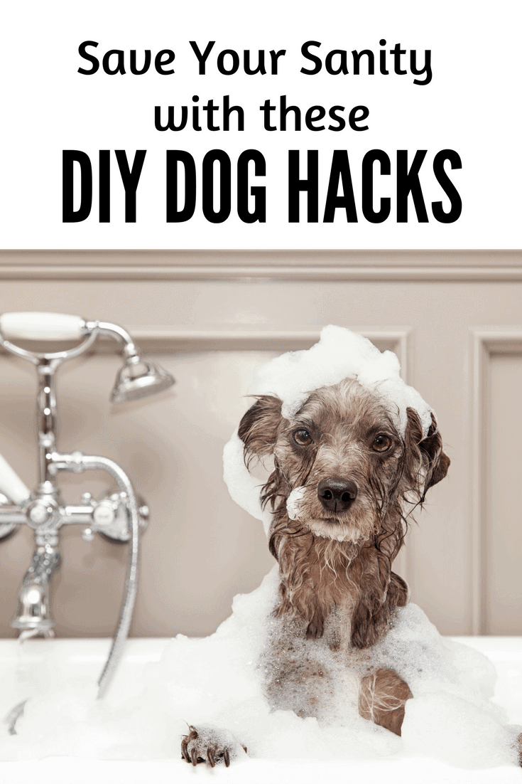 These dog hacks will save your sanity!