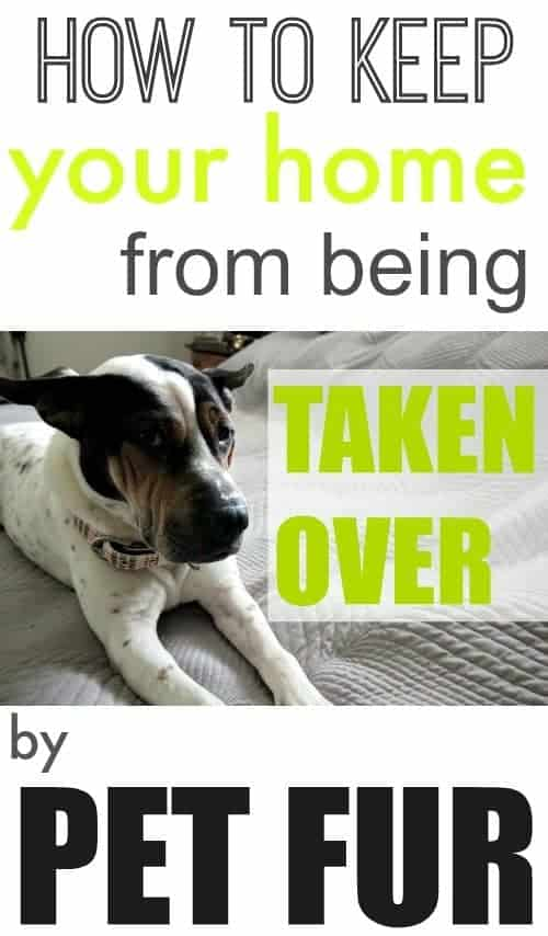 How to Keep Your Home From Being Taken Over by Pet Fur by The Creek Line House | Dog Hacks that everyone should know to save their sanity!