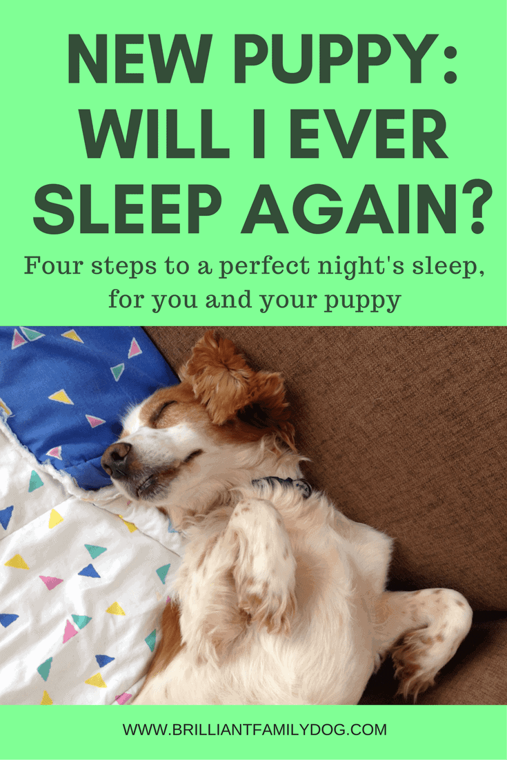 New Puppy Sleep Solutions by Brilliant Family Pet | Dog Hacks to save your sanity