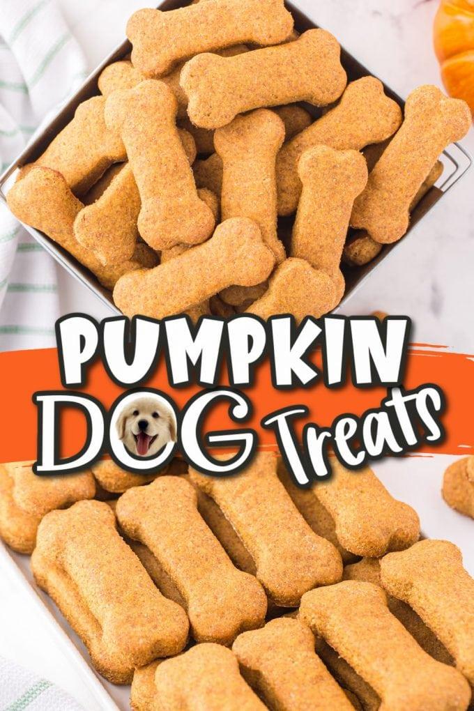 pumpkin dog treats pinterest
